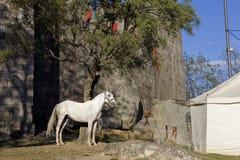 Guimaraes Stock Images
