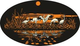 Guindaste branco Siberian perto da água no alvorecer ilustração stock