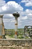 Guindaste em seu ninho sobre as ruínas romanas Imagem de Stock