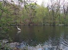 Guindaste no lago Imagens de Stock