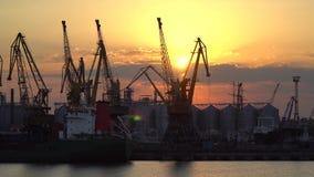 Guindastes no porto contra o sol da noite Imagem de Stock