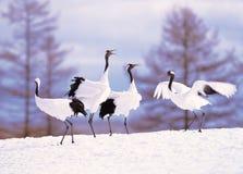 Guindastes no snowscape Imagens de Stock Royalty Free