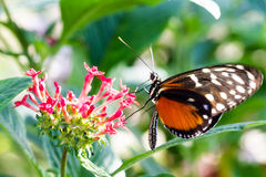 Guindineau coloré sur la fleur Photo stock
