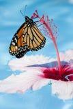 Guindineau et fleur Photo stock
