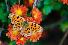 Guindineau et fleurs Photos libres de droits