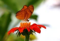 Guindineau orange photographie stock