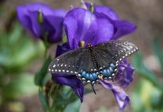 Guindineau sur des fleurs photo stock