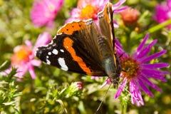 Guindineau sur la fleur Images stock
