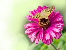 Guindineau sur la fleur Photos stock