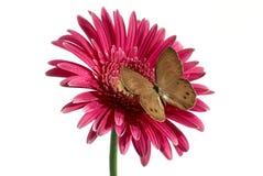 Guindineau sur la fleur Photo stock