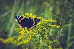Guindineau sur les fleurs jaunes Photographie stock libre de droits