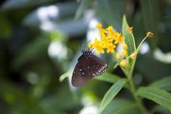 Guindineau sur une fleur Photo stock