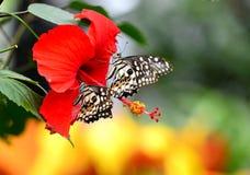Guindineaux et fleurs Images stock