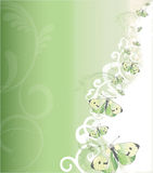 Guindineaux verts et blancs Images stock