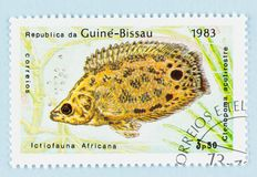 Free Guine Bissau Postage Stamp - Fish 1983 Royalty Free Stock Photo - 159639515