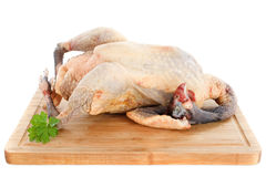 Guinea fowl Stock Photography