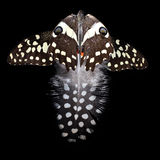 Feather and wings. Guinea fowl feather and butterfly wings on black background royalty free stock photo