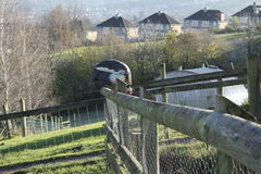 Guinea fowl on the fence royalty free stock photo
