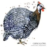 Guinea fowl. wild bird watercolor seamless pattern. Guinea fowl illustration. wild bird watercolor seamless pattern Royalty Free Stock Images