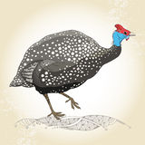 Guinea fowl on the textured beige background Royalty Free Stock Photos