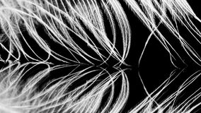 Guinea hen feather Stock Image