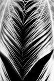 Guinea hen feather Royalty Free Stock Photos