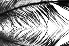 Guinea hen feather. With details royalty free stock photo