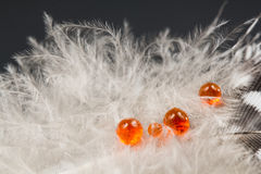 Guinea hen feather with orange water drops Stock Photography