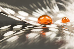 Guinea hen feather with orange water drops. And dark background stock photo