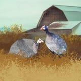 Guinea-Hennen auf dem Bauernhof stockfotografie