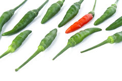 Guinea-pepper Stock Images
