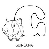 Guinea pig alphabet coloring page. Animal alphabet coloring page. Vector illustration of educational alphabet coloring page with cartoon character for kids stock illustration
