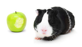 Guinea pig and an apple . Royalty Free Stock Photos