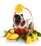 Guinea pig in a basket with a bow, flowers and a champagne glass. Stock Photo