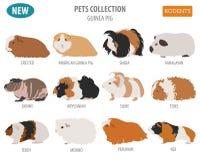 Guinea Pig Breeds Icon Set Flat Style Isolated On White. Pet Rod Stock Photos