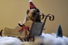 Guinea pig. In Christmas hat, sleigh. With fake snow and plastic tree Stock Image