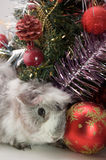 Guinea pig Christmas tree. Guinea pig under Christmas tree and decorations Royalty Free Stock Photography