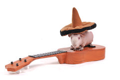 Guinea Pig in hat on Guitar Royalty Free Stock Images