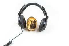 Guinea pig with headphones Royalty Free Stock Photography