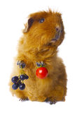 Guinea Pig Holding Crops Isolated Royalty Free Stock Photos