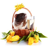 Guinea Pig In A Basket With A Flowers And A Champagne Glass. Royalty Free Stock Photography