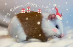 Guinea Pig outdoor in winter as Santa Claus. Kids will go crazy over this. Guinea Pig outdoor in winter dressed as Santa Claus. Kids will go crazy over this. new vector illustration