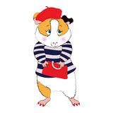 Guinea pig in the Parisienne. Royalty Free Stock Image