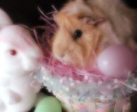 Guinea pig and rabbit in easter setting Stock Image
