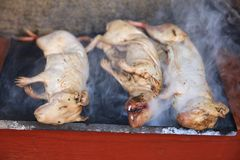 Guinea Pig roasted - traditional Meal in Peru royalty free stock photography