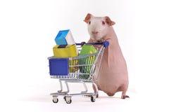 Guinea Pig Shopper Stock Images