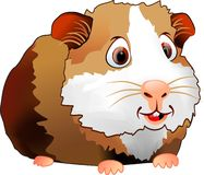 6587 guinea pig shoulder Στοκ Εικόνες