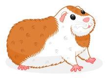 6587 guinea pig shoulder ελεύθερη απεικόνιση δικαιώματος