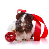 Guinea pig with a tape and a sphere Stock Photos
