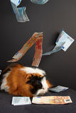 The guinea pig of wealth Stock Photography